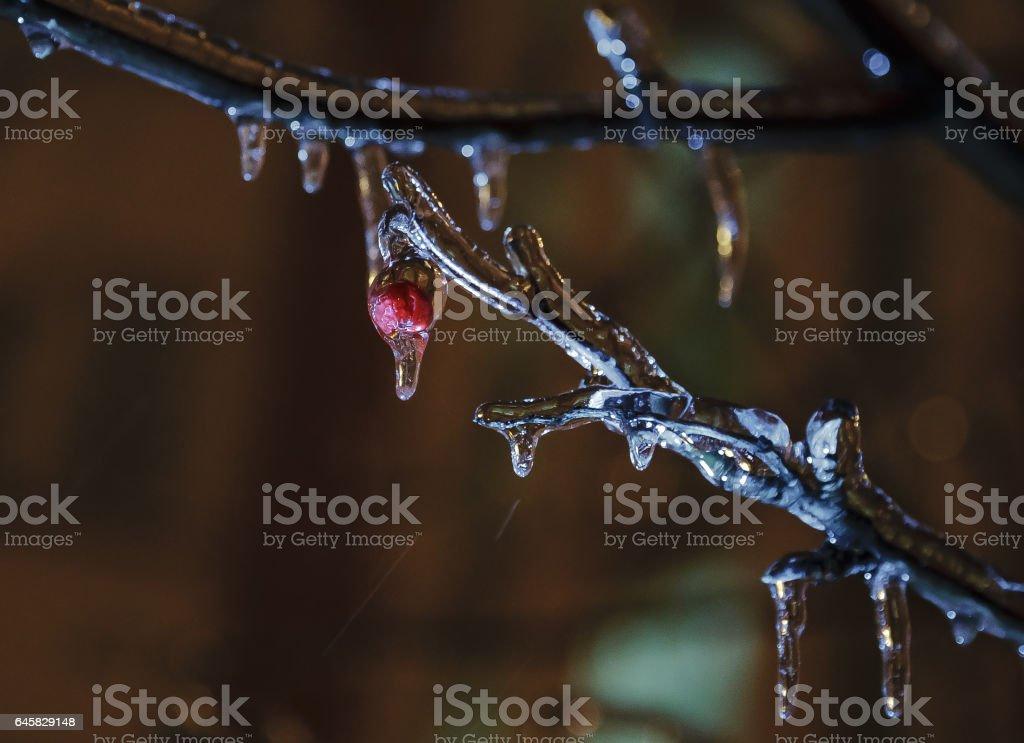 Frozen rowan in the night (2) stock photo