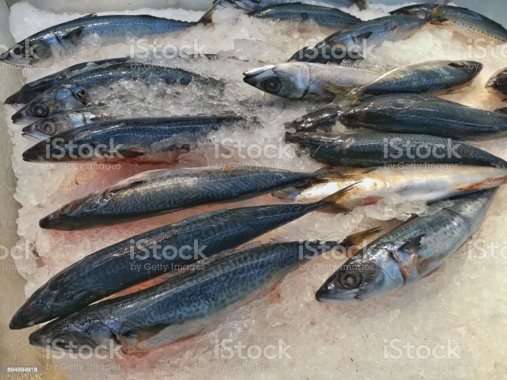 Frozen Saba fish on ice. stock photo