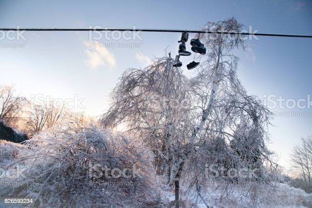 Photo of Frozen Shoes on a line are covered in ice from an ice storm. The ice covers them and trees with a thick layer, showing a cold winter scene.