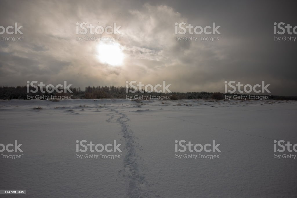 frozen snow covered beach by the sea in harsh winter