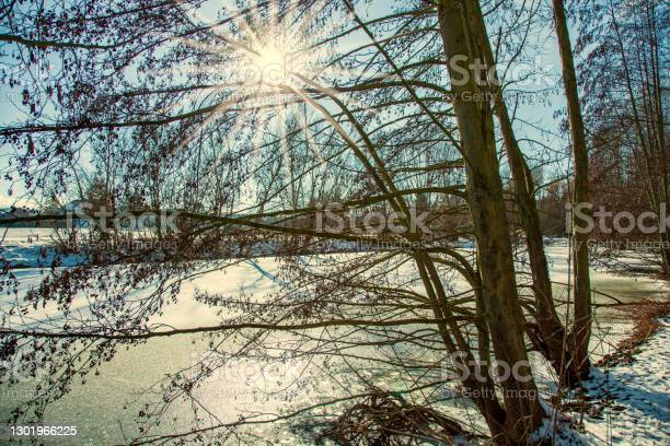 Photo of Frozen snow Fish pond alder trees bending over against sunlight. Shore covered with ice crystals, water surface. horizon, blue sky winter background.