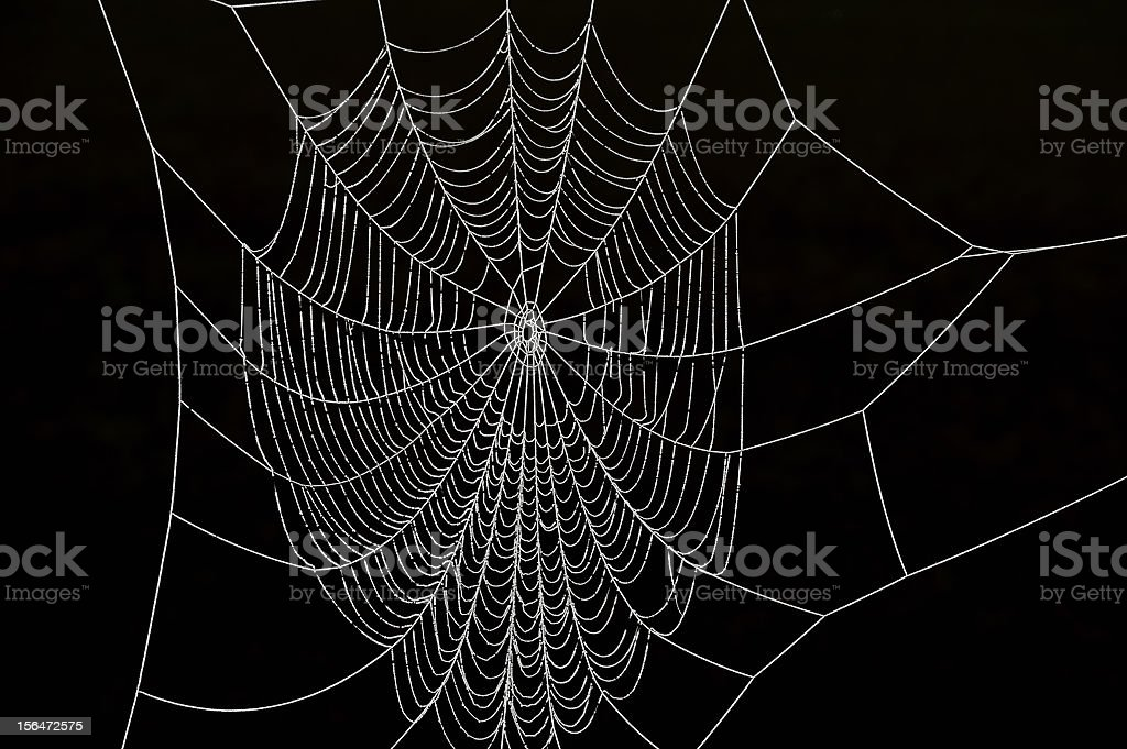 Frozen Spider Web stock photo