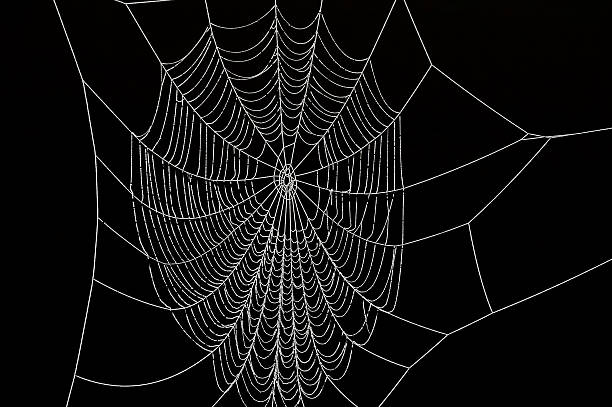 frozen spider web - spider web stock photos and pictures