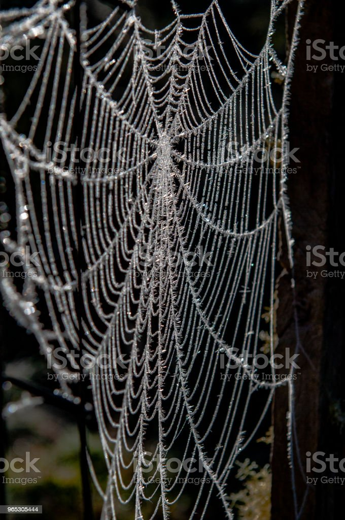 Teia de Aranha Congelada royalty-free stock photo