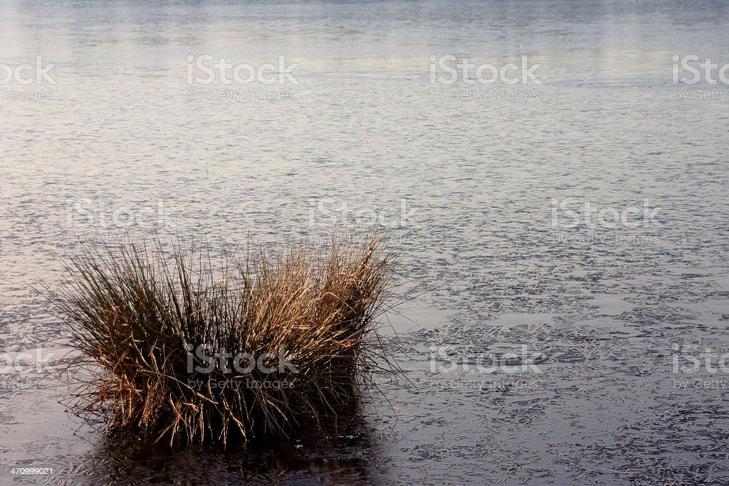 frozen swamp stock photo