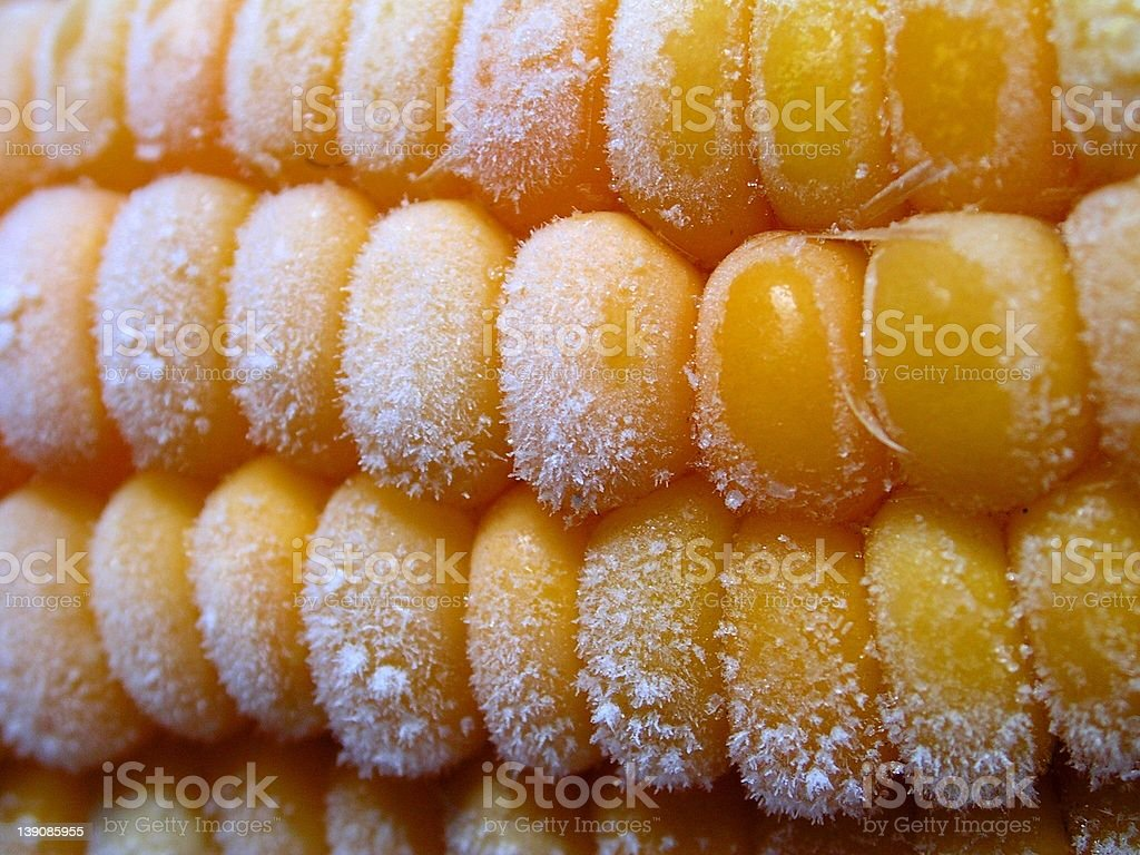 Frozen Sweetcorn royalty-free stock photo