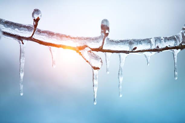 냉동상태의 트리 - 고드름 뉴스 사진 이미지
