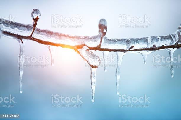 Photo of Frozen Tree