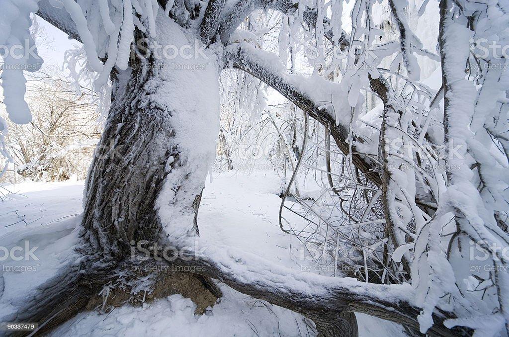 Zamrożone drzewa - Zbiór zdjęć royalty-free (Bez ludzi)