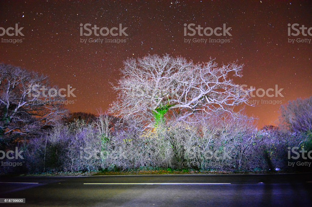 Frozen Trees and Starry Night Sky stock photo
