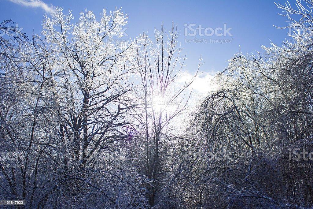 Frozen Trees in Maine stock photo