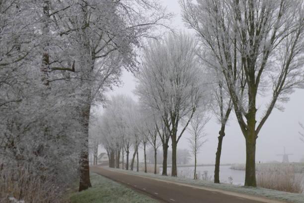 frozen trees in street beemster - beemster stockfoto's en -beelden