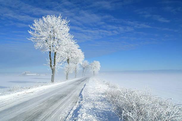 Frozen tree – Foto