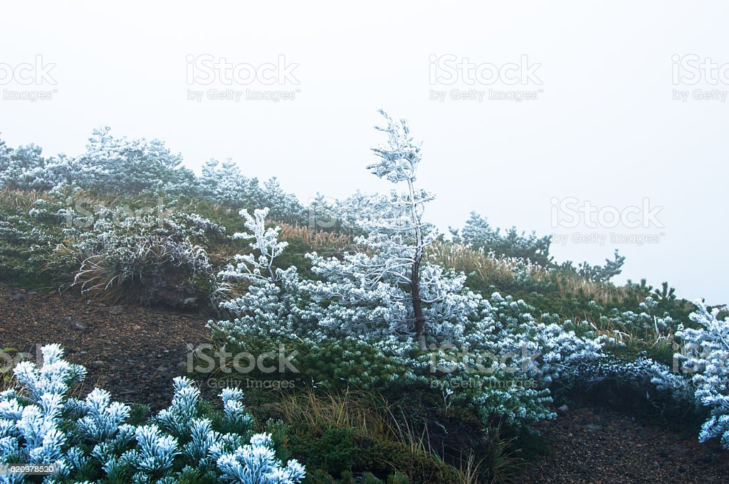 Frozen trees on a mountain top in Japan stock photo
