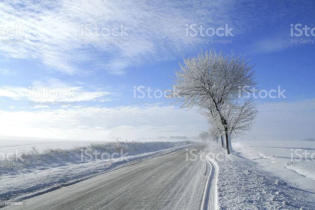 Frozen trees royalty-free stock photo