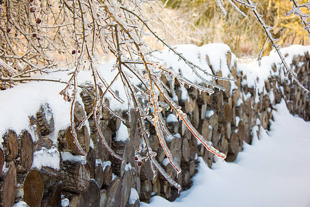 Frozen Trees with Stacked Wood in Background stock photo