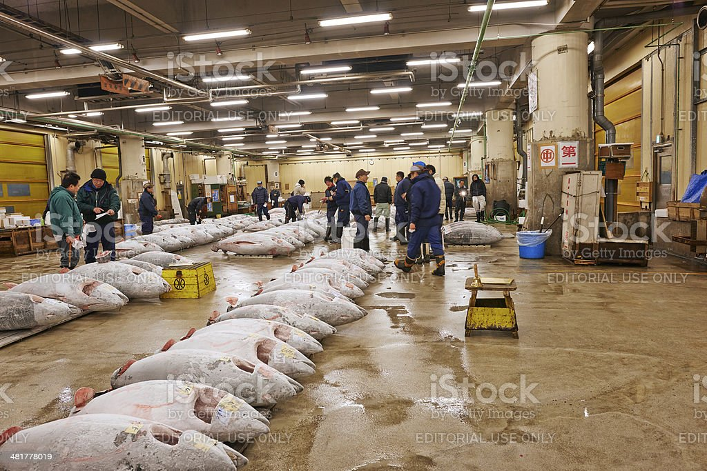 Frozen Tuna at Tsukiji Fish Market stock photo