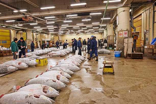 Frozen Tuna at Tsukiji Fish Market stock photo