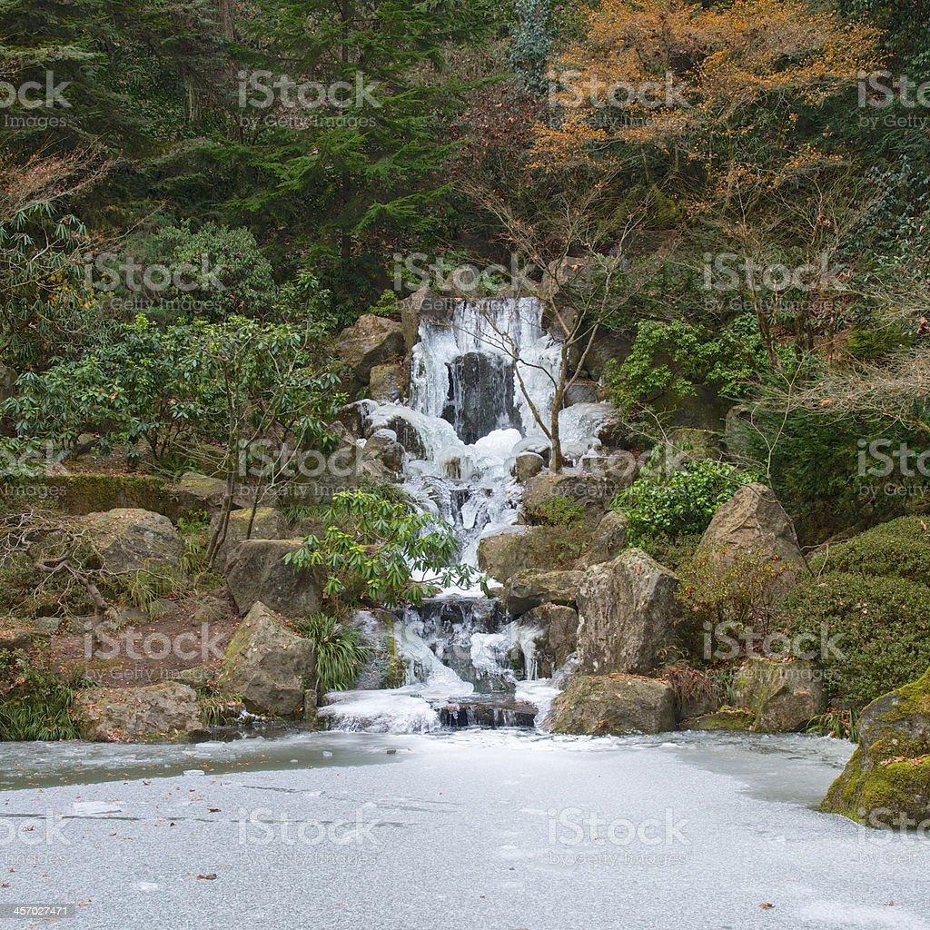 Frozen waterfall ice koi pond japanese garden portland for Koi pond freezing