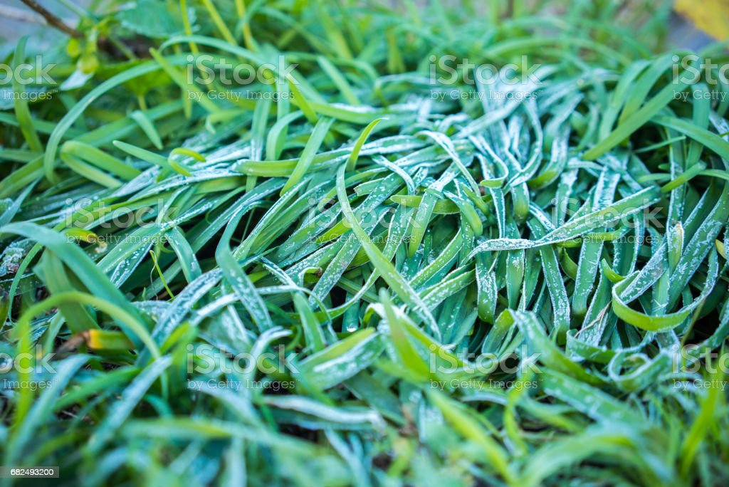 Frozen weed royalty-free stock photo