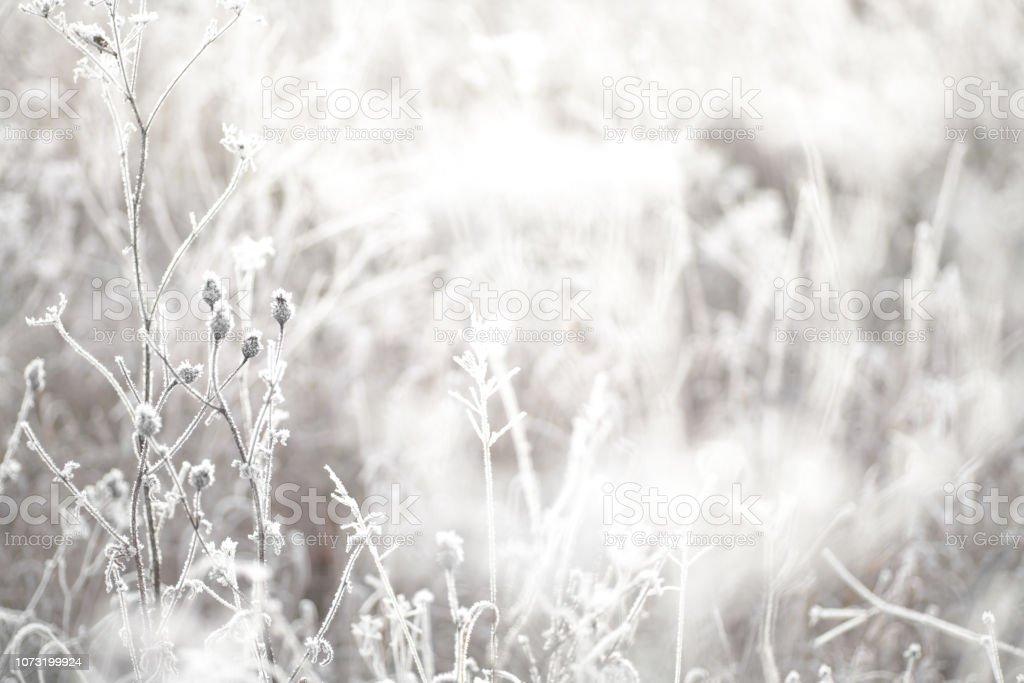 Wilde Blumen an einem kalten Wintermorgen eingefroren – Foto
