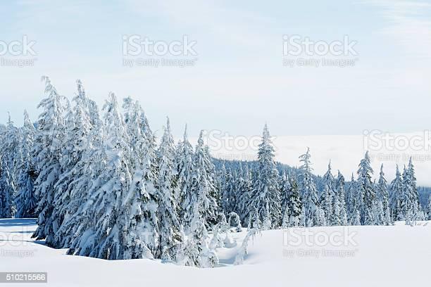 Frozen Wilderness Stock Photo - Download Image Now