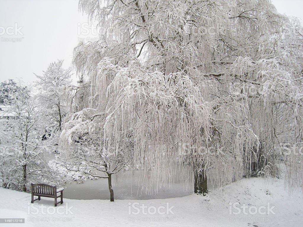 Frozen Willow stock photo