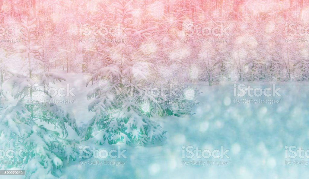 Frozen winter forest with snow covered trees. stock photo