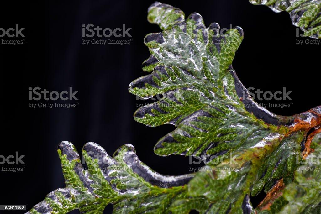 frozen world stock photo