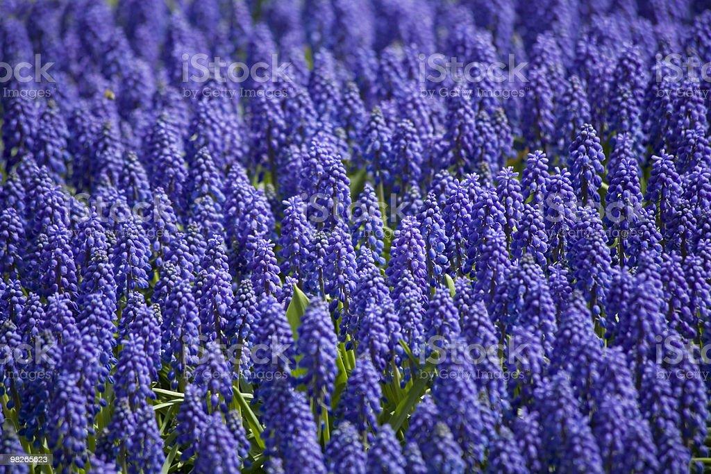Fruehlingsblumen foto stock royalty-free