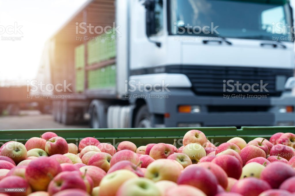 Fruit and food distribution. Truck loaded with containers full of apples ready to be shipped to the market. stock photo
