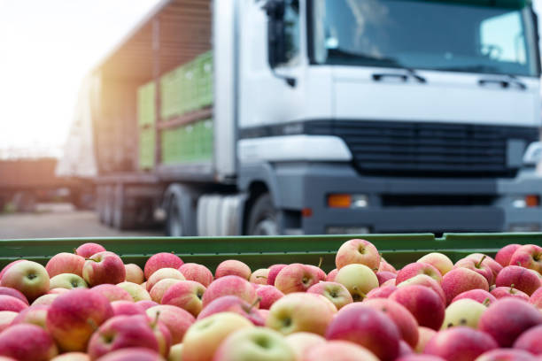 fruit and food distribution. truck loaded with containers full of apples ready to be shipped to the market. - food delivery imagens e fotografias de stock