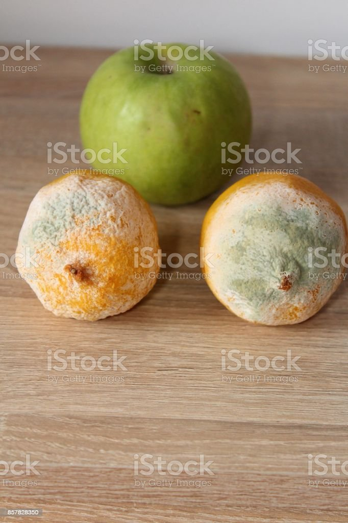 Fruit and mold. stock photo