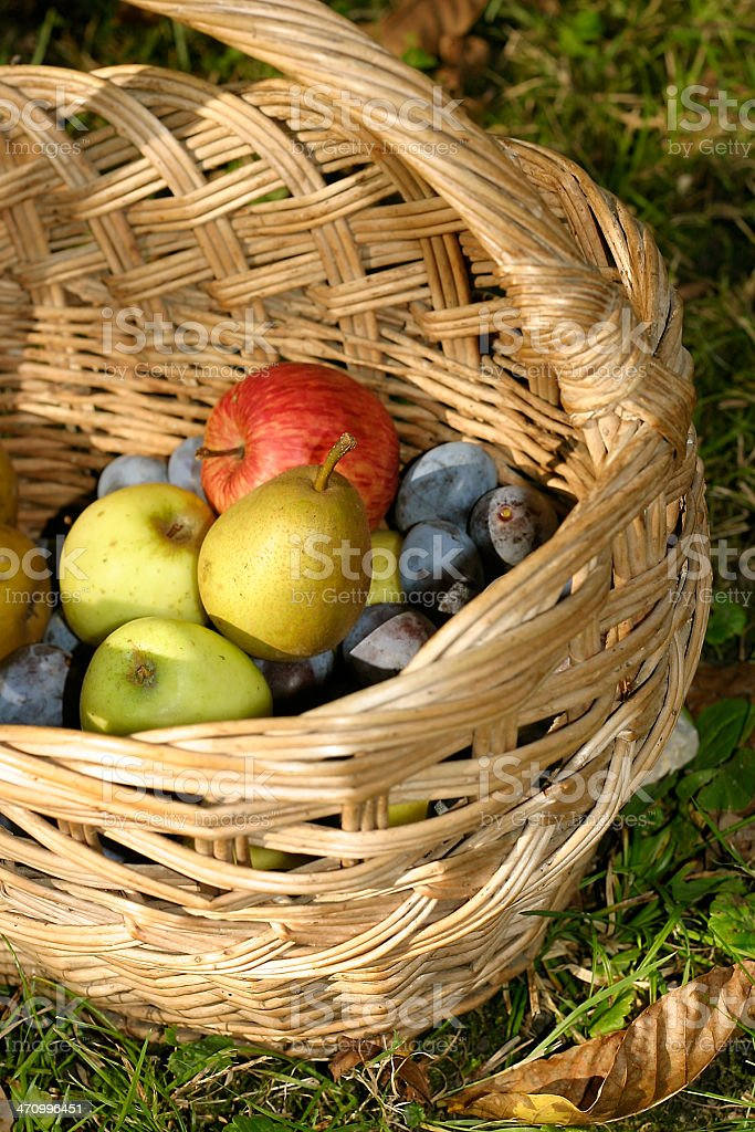 Fruit Basket II royalty-free stock photo