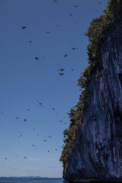 obst bats und kalkstein island - wasserfledermaus stock-fotos und bilder