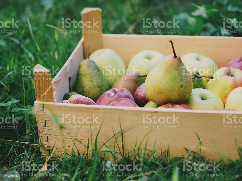 Fruit crate stock photo