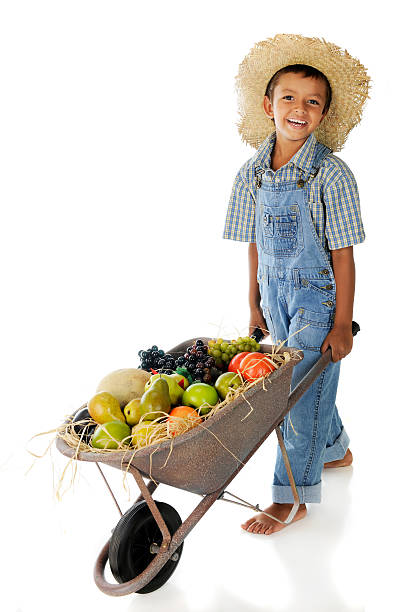 Fruit Farm Boy An adorable young farmer pushing a wheelbarrow full of assorted fruit.  On a white background. bib overalls boy stock pictures, royalty-free photos & images
