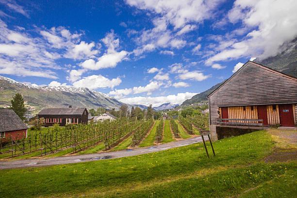 Obst Gärten im Ulvik, Norwegen – Foto