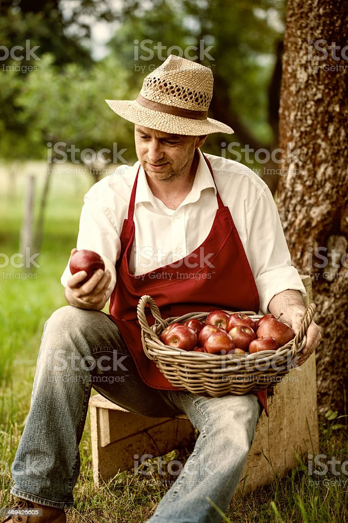 fruit grower in his orchard tasting apple harvest stock photo