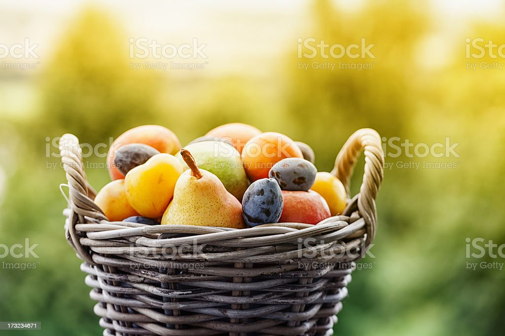 fruit in basket outdoors  summer stock photo