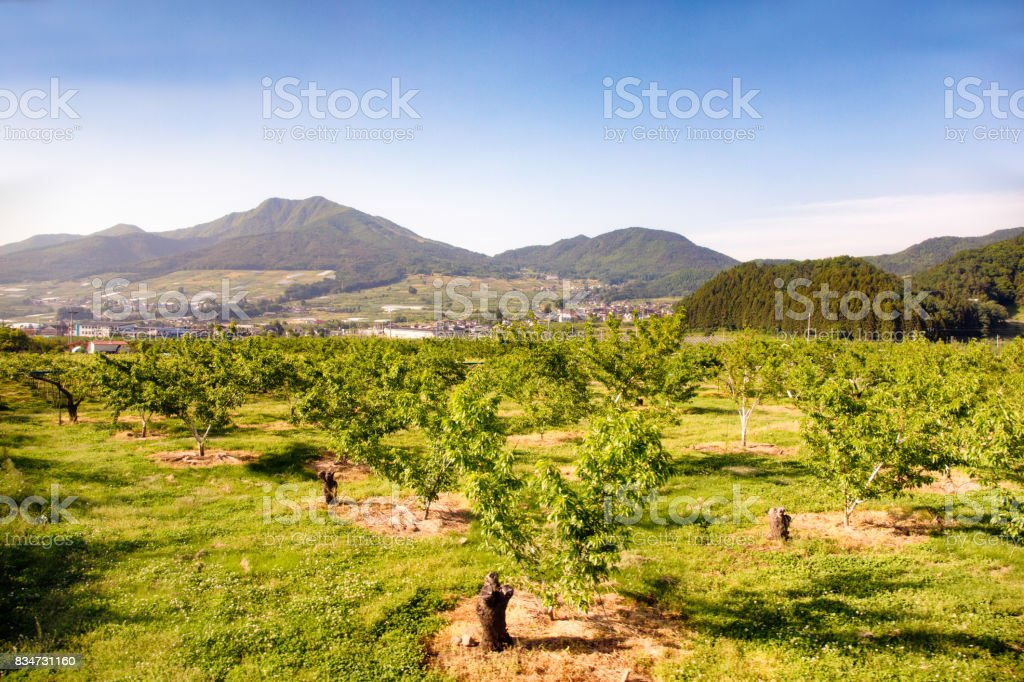 Fruit orchard in Japan Nagano prefecture with mountains stock photo