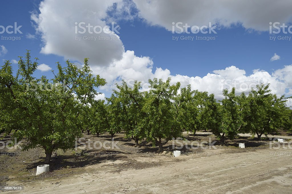 Fruit Orchard Under Cloudy Sky stock photo