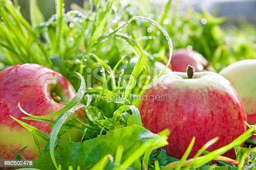 505840263istockphoto Fruit ripe, red, juicy apples lie on a green grass 692502478