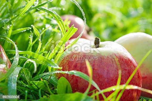 505840263istockphoto Fruit ripe, red, juicy apples lie on a green grass 692503504