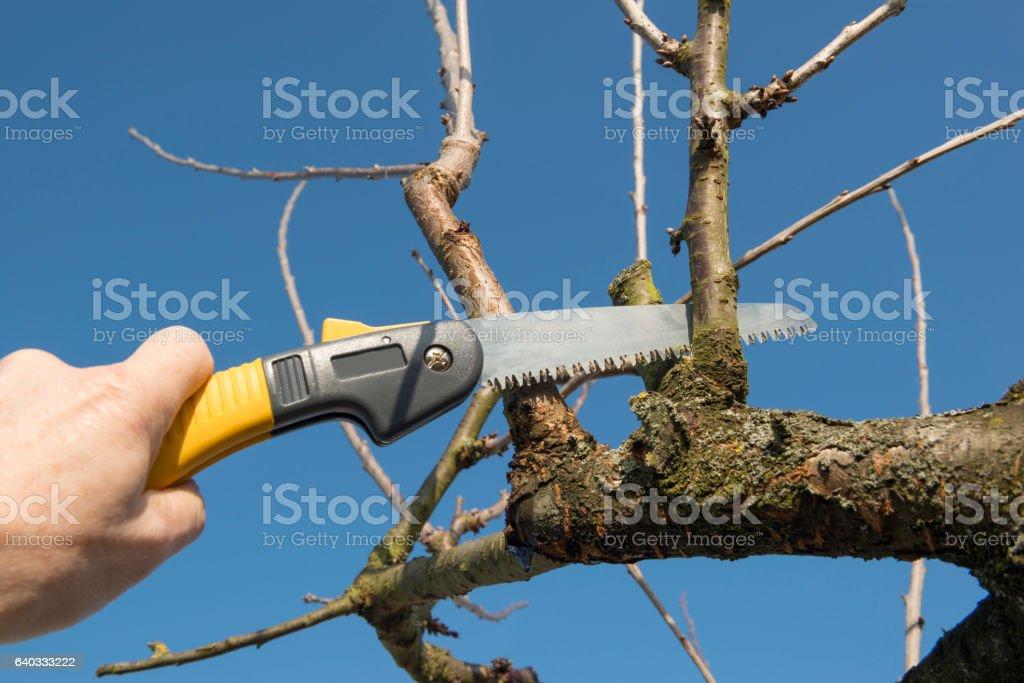 Fruit tree cut stock photo