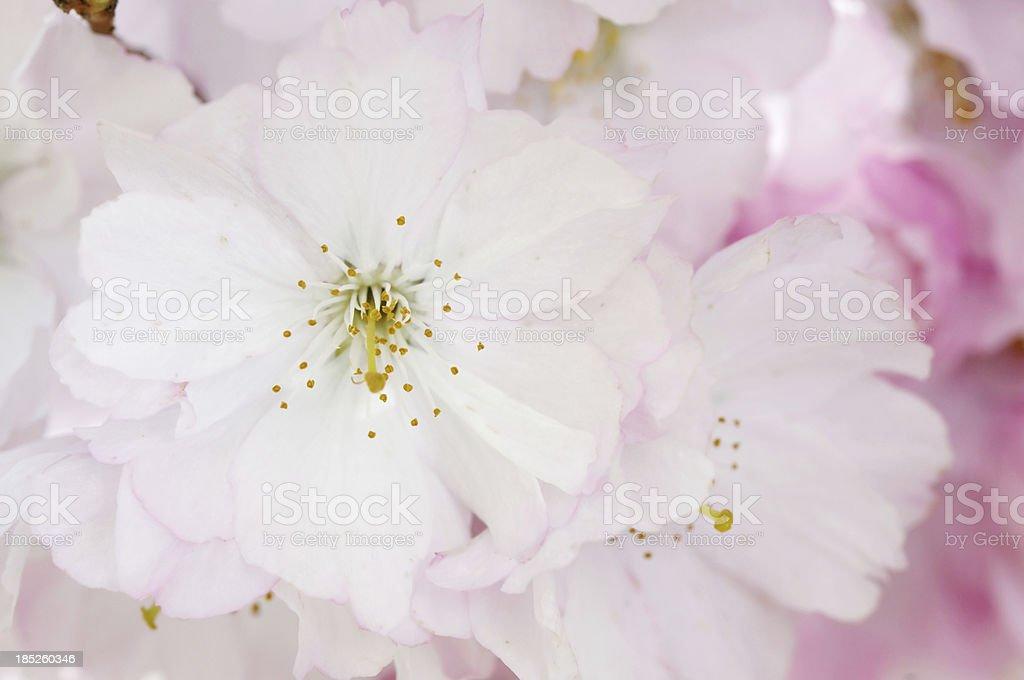 Fruit Tree Flower stock photo