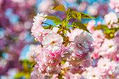 istock Fruit Tree in Bloom 1214383409