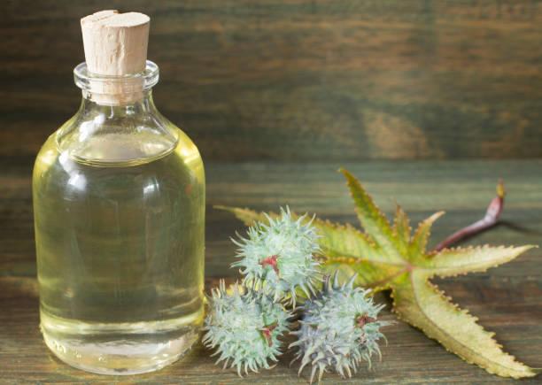水果和檸檬油-利西斯公社 - ricin 個照片及圖片檔