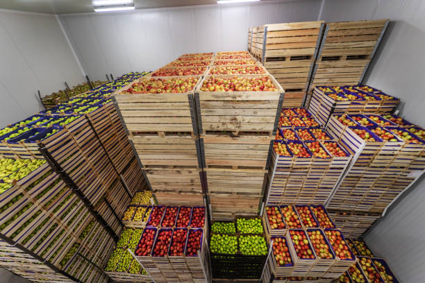 Fruits in crates ready for shipping. Cold storage interior. stock photo