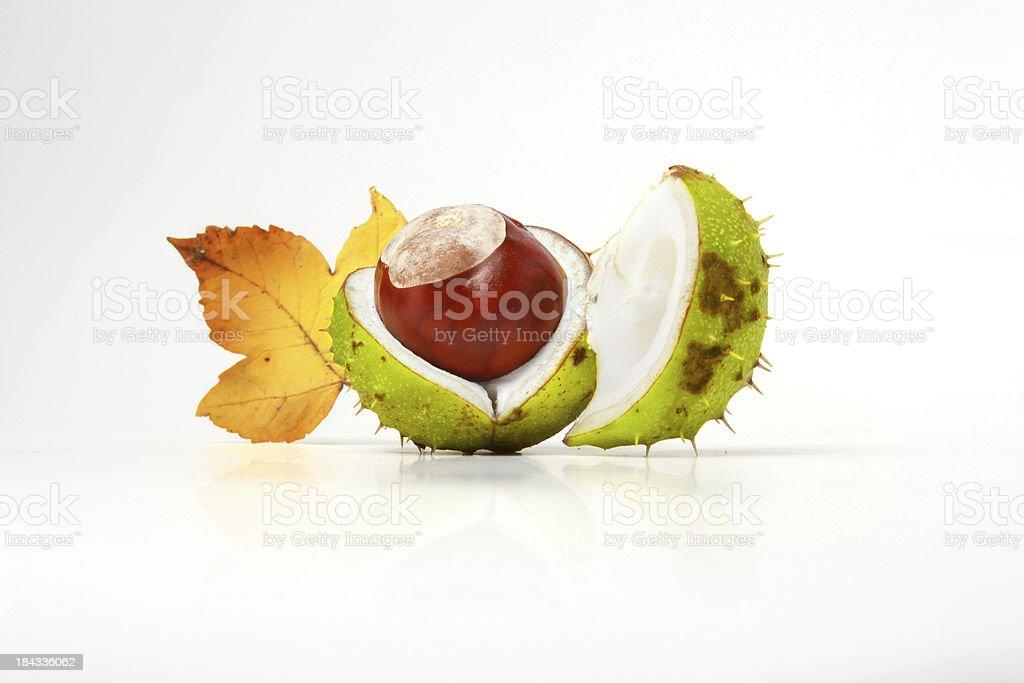 Fruits of fall royalty-free stock photo
